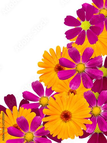 Ingelijste posters Bloemenwinkel Flowers camomiles