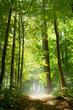 canvas print picture - Wald und Nebel