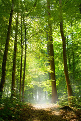 Panel Szklany Podświetlane Drzewa Wald und Nebel