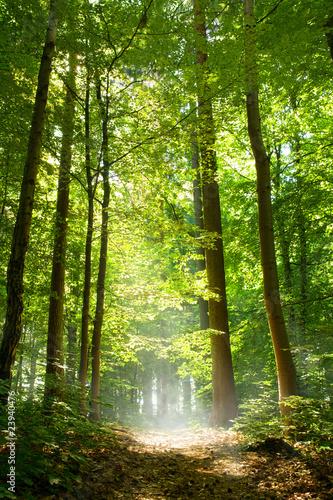 Obraz Wald und Nebel - fototapety do salonu