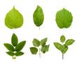 Листья растений.