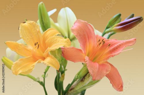 In de dag Narcis Lilies