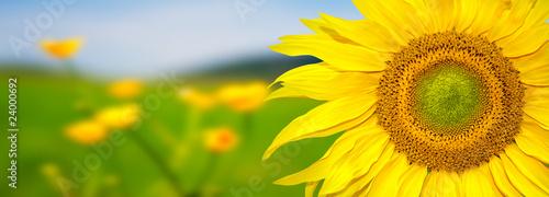 Keuken foto achterwand Zonnebloem Sunflower banner