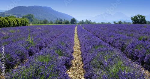 Foto op Plexiglas Lavendel champ de lavande