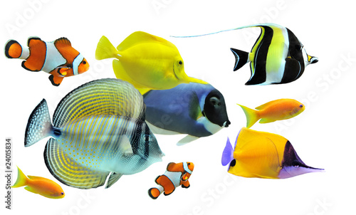 Photo group of fishes