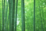 Las z bambusami