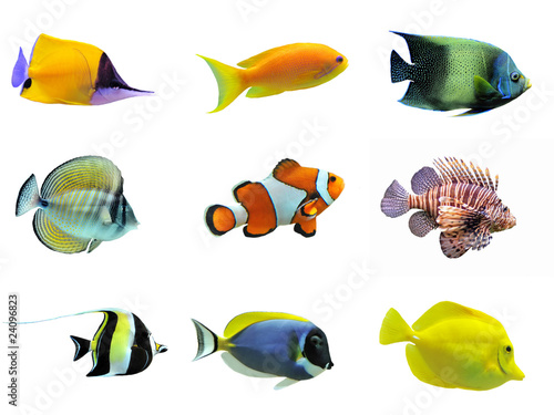 Fotografia group of fishes