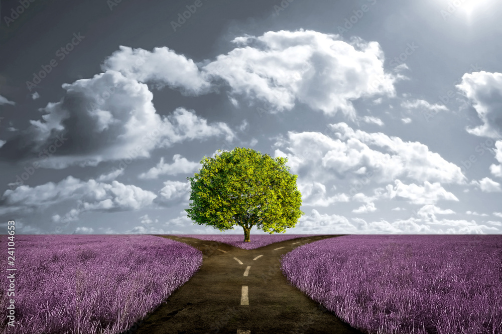 Fototapety, obrazy: Crossroad in lavender meadow