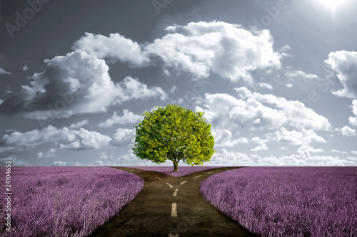 Obraz Crossroad in lavender meadow - fototapety do salonu