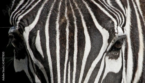Fototapeta Detail zebra stripes and eye obraz na płótnie