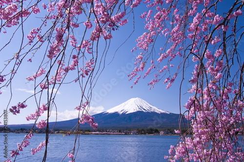 Papiers peints Japon Mt.Fuji with cherry blossom
