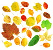 Mixture of autumnal leaves