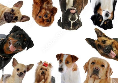 Foto  Zehn verschiedene Hundeporträts in Kreisen