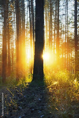Fotobehang Natuur sunset