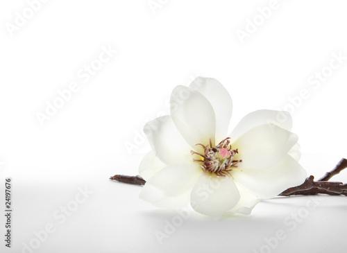 Papiers peints Magnolia Magnolie