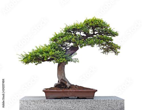 Tuinposter Bonsai Bonsai tree