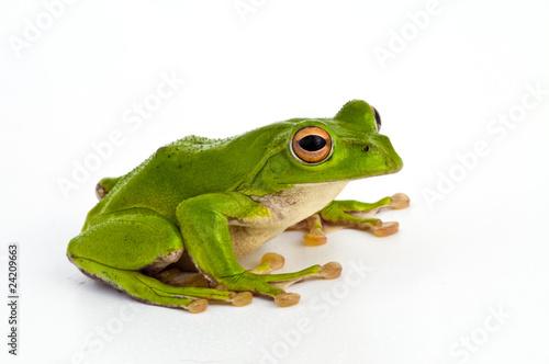 Tuinposter Kikker カエル