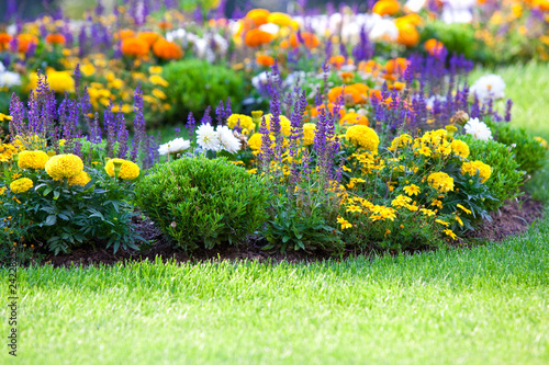 Canvas-taulu multicolored flowerbed on a lawn
