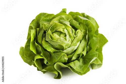 Leinwand Poster Salat Kopfsalat Blattsalat