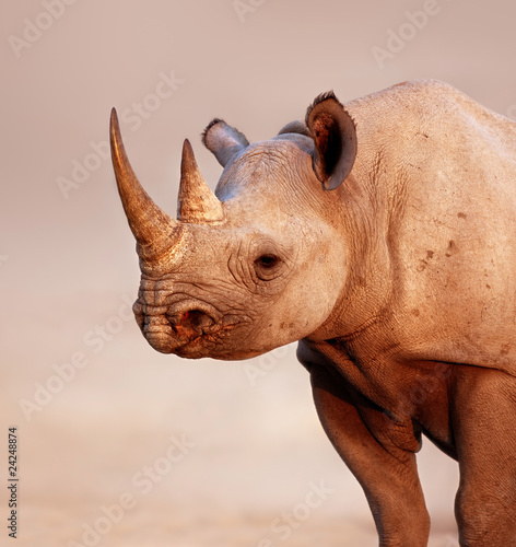 Poster Rhino Black Rhinoceros