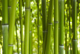 Fototapeta Bedroom - Bambus Bamboo 06