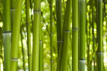 Obraz Bambus Bamboo 06