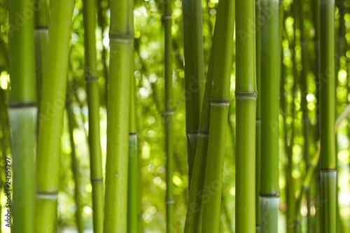 Doppelrollo mit Motiv - Bambus Bamboo 06