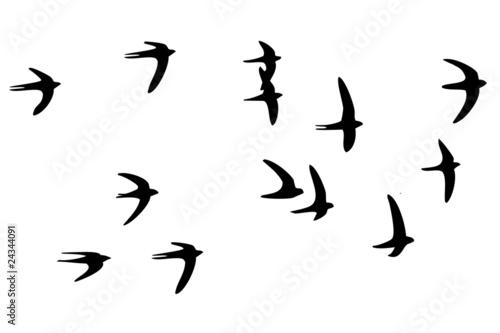 stado-ptakow-naklejka-scienna
