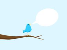 Blue Bird Singing In Tree