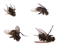4 Dead Flies