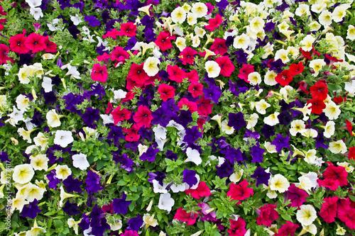 Spoed Foto op Canvas Macro Garden flowers