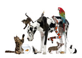 Fototapeta Zwierzęta - Group of pets together in front of white background