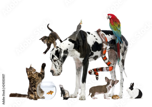 Group of pets together in front of white background #24383807