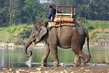 Elephant And Mahout At River I...
