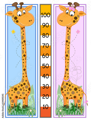 Canvas Prints Zoo Giraffes scale