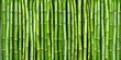 canvas print picture - bamboo
