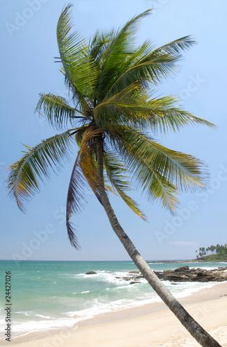 Spoed Foto op Canvas Natuur Tropical paradise