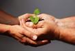 canvas print picture - Pflanze gemeinsam in den Händen halten