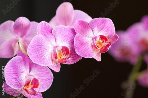 piekna-orchidea-w-kwiacie