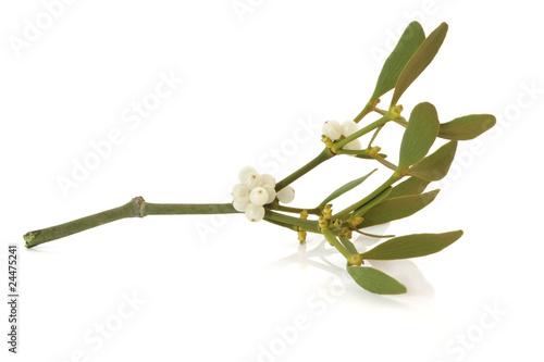 Fotografie, Obraz  Mistletoe Leaf Sprig with Berries