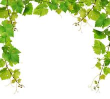 Fresh Grapevine Border On White Background