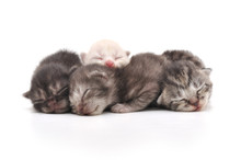 Kittens Sleeping