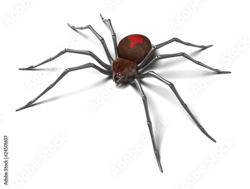 Photo  Spider : Black Widow. Isolated on white surface. 3D render.