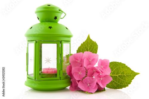 Photo  Hydrangea with green lantern
