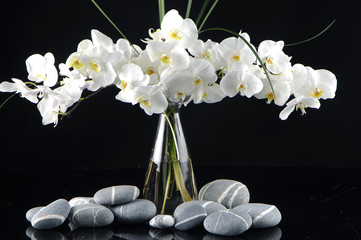 Panel Szklany Storczyki Beautiful orchid in vase with pebble on black