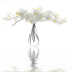 Fototapeta na wymiar White orchid in vase reflection