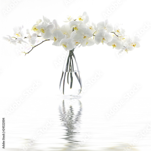 Fotomural White orchid in vase reflection
