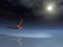 Eagle Night