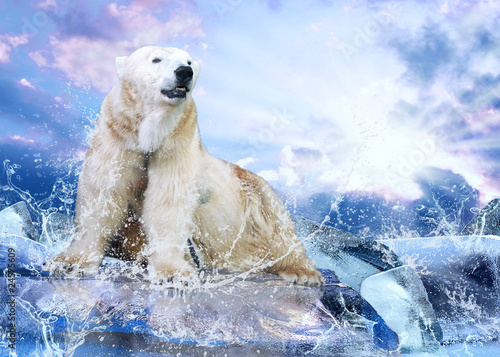Fototapety, obrazy: White Polar Bear Hunter on the Ice in water drops.