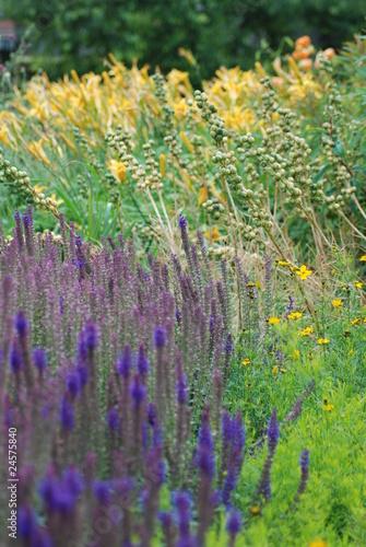 Fototapety, obrazy: Field flowers